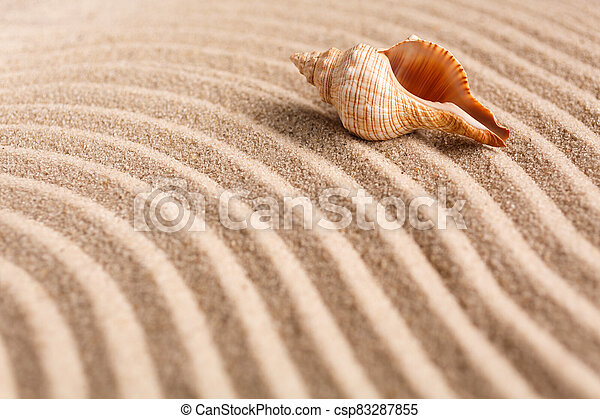 Seashell on the yellow sand on a sunny day. Natural background with place for your text. - csp83287855