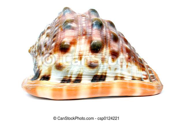 Seashell - csp0124221