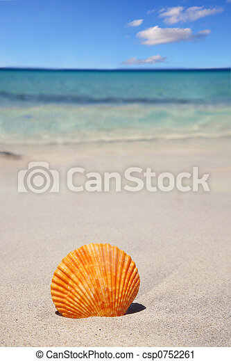 Seashell - csp0752261