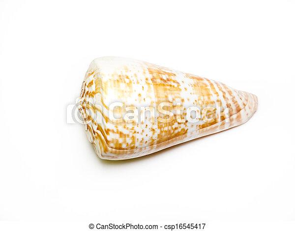 Seashell. - csp16545417
