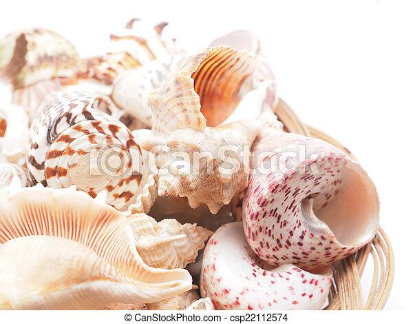 seashell - csp22112574