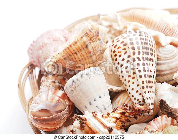 seashell - csp22112575