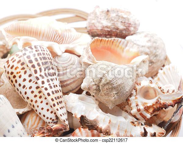 seashell - csp22112617