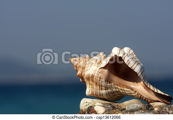 Seashell - csp13612066