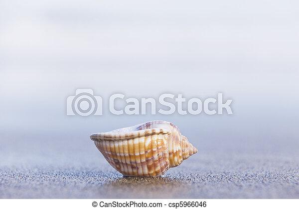 Seashell - csp5966046