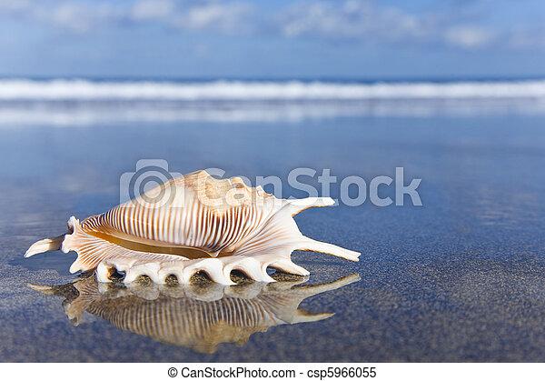 Seashell - csp5966055