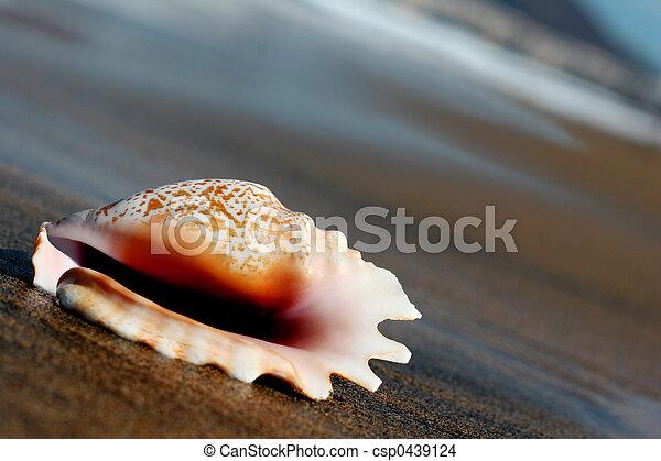Seashell - csp0439124