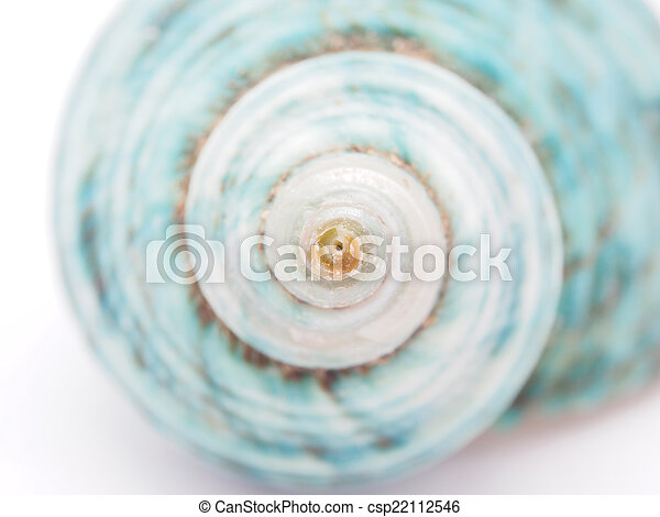seashell - csp22112546