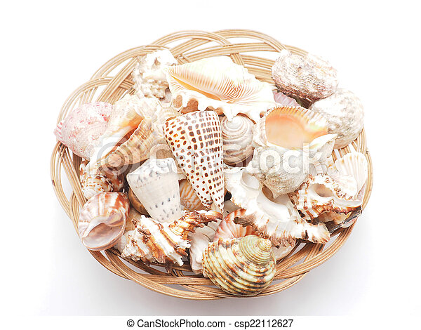 seashell - csp22112627