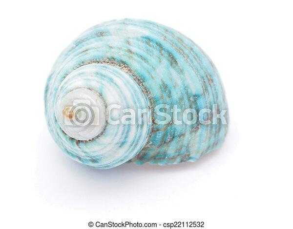 seashell - csp22112532
