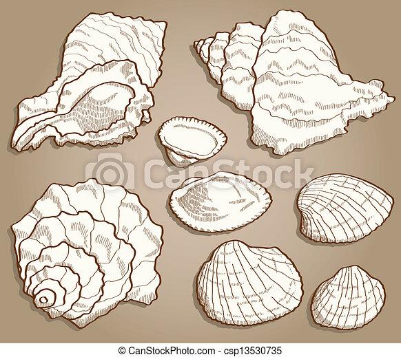 seashell, style, ensemble, vendange - csp13530735