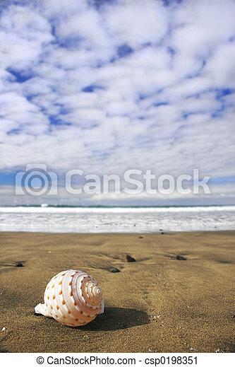 Seashell View - csp0198351