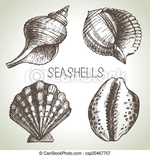 Seashells hand drawn set. Sketch design elements - csp20467707