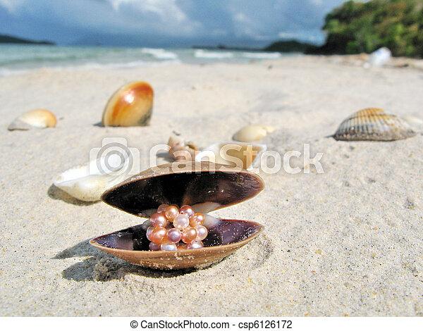 Seashells on a beach of Langkawi island, Malaysia  - csp6126172