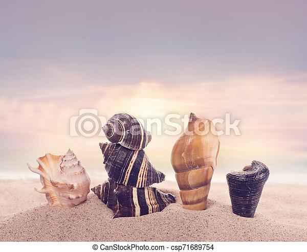 seashells on sand in the beach under sunset sun light - csp71689754