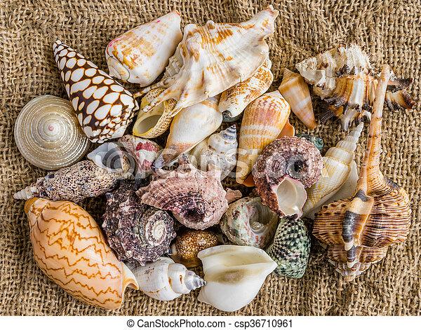 seashells on the sand of a beach. - csp36710961