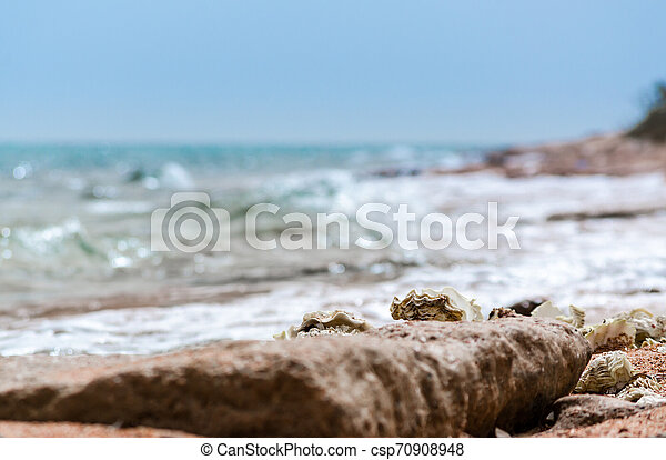 seashells on the sand on the beach against the backdrop of the sea close up - csp70908948
