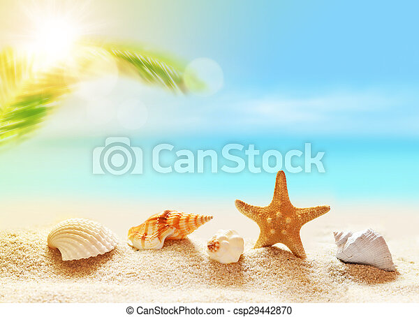 seashells on the sandy beach and palm - csp29442870