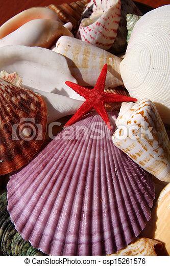 Seashells - csp15261576