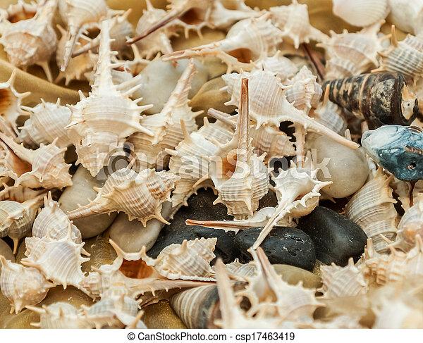 Seashells - csp17463419