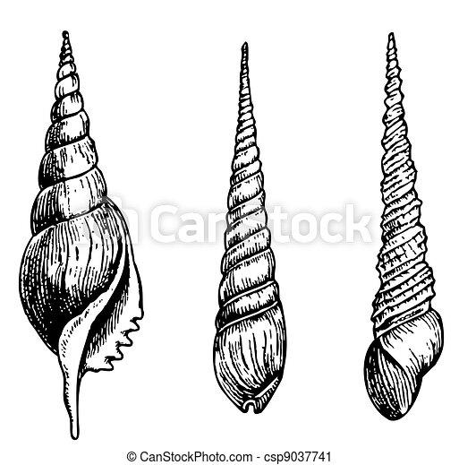 Seashells - csp9037741