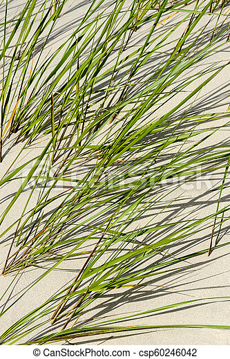 seaside sand with green grass - csp60246042