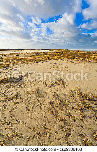 Seaside with sand dunes - csp9306163