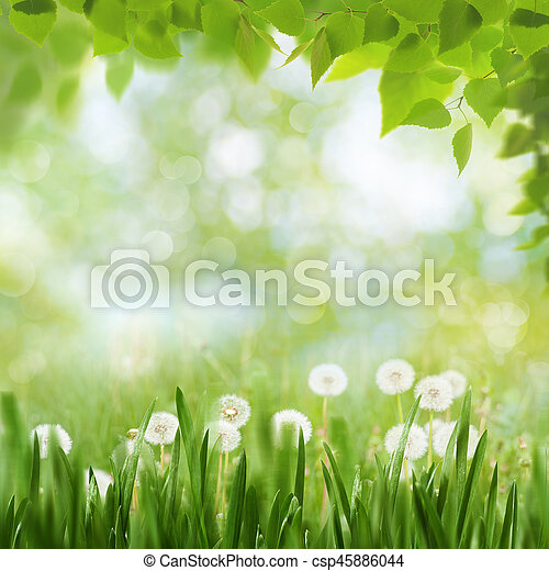 Seasonal landscape with dandelion flowers and beauty spring foliage - csp45886044