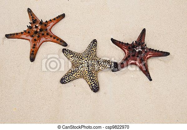 Seastar in sand - csp9822970