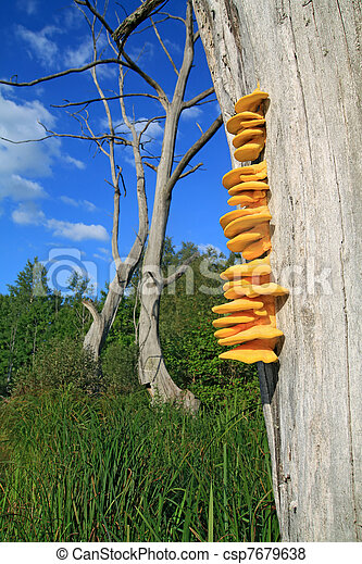 sec, arbre, jaune, champignon - csp7679638