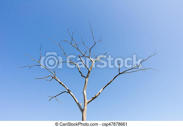 sec, bleu, arbre, feuilles, ciel, contre, sans - csp47878661