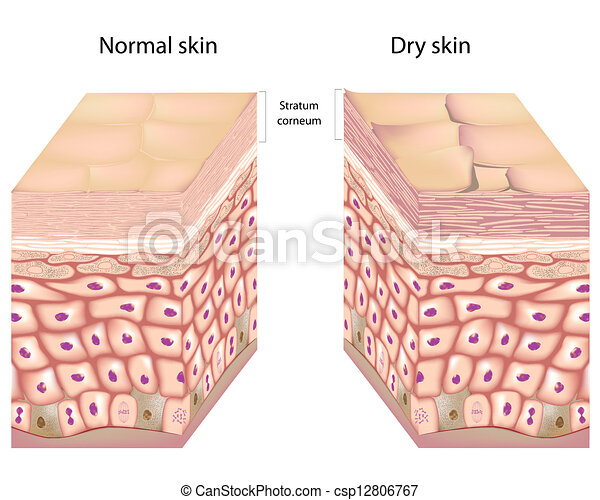 sec, peau, eps8 - csp12806767