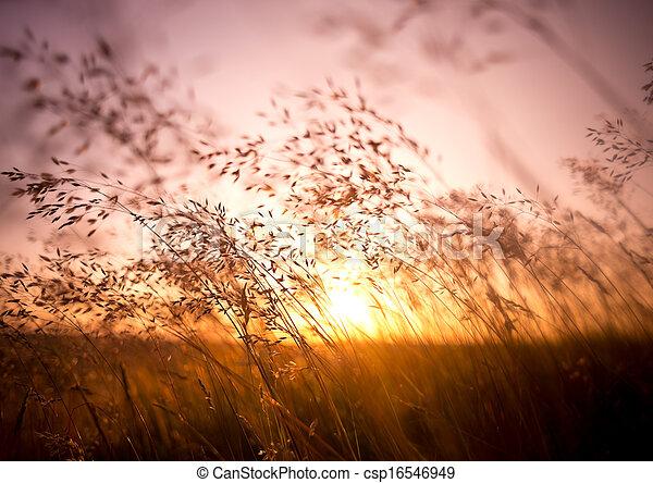 Hierba seca de verano - csp16546949