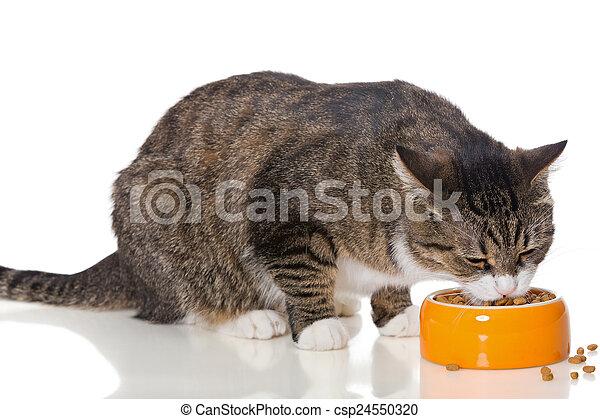 secos, cinzento, alimento, come, gato raiou - csp24550320