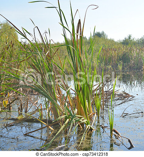 Sedge on the banks of a small river. - csp73412318