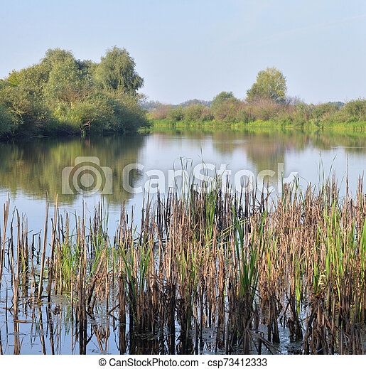 Sedge on the banks of a small river. - csp73412333