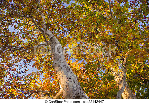 Sedona folla en otoño - csp22142447