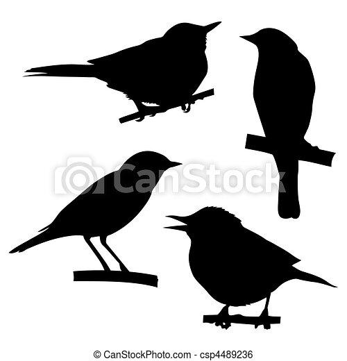 seduta, albero, silhouette, vettore, ramo, uccelli - csp4489236