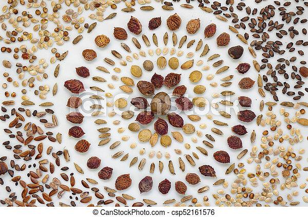 seed mandala over white background - csp52161576