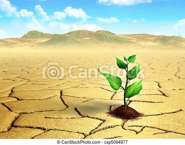 Seedling in the desert - csp5094977