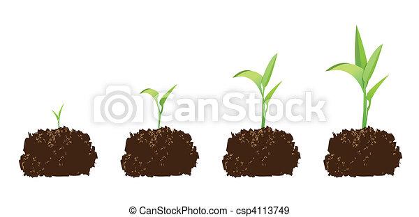 seedling or germination - csp4113749