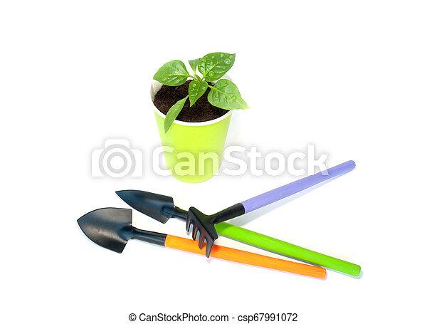 Seedlings of pepper with garden tools - csp67991072
