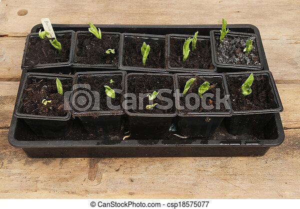 seedlings - csp18575077