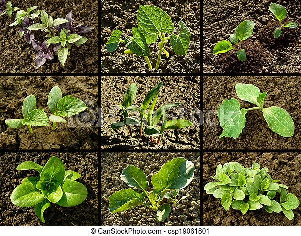 seedlings set - csp19061801