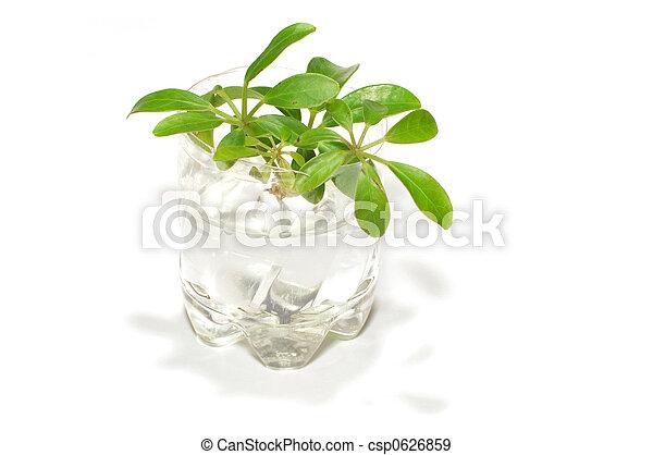 seedlings - csp0626859