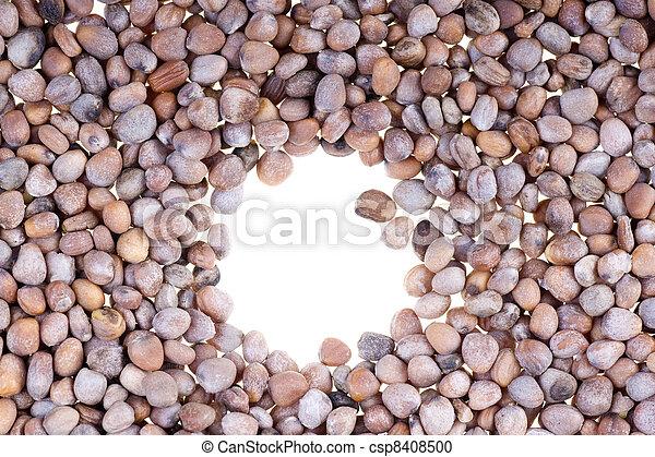seeds of red radish - csp8408500
