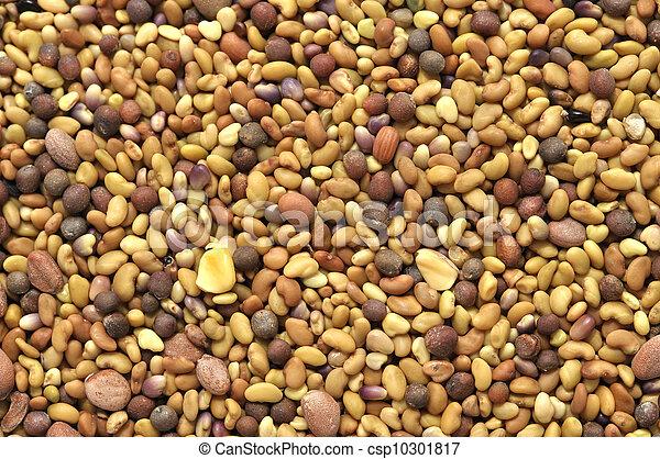 Seeds - csp10301817