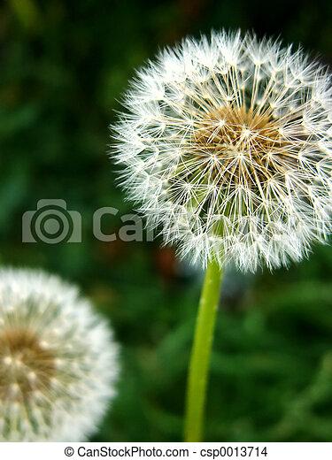 seeds - csp0013714