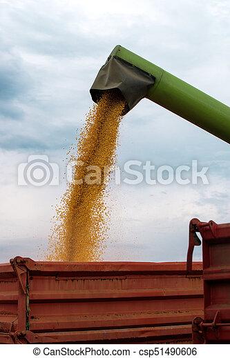 Una cosechadora ambulante que descarga maíz cosechado en un remolque tractor - csp51490606