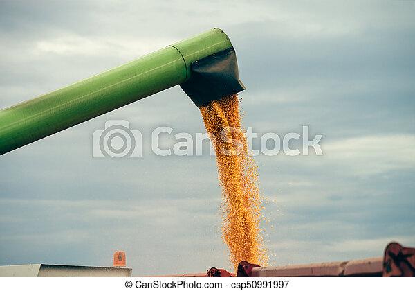 Una cosechadora ambulante que descarga maíz cosechado en un remolque tractor - csp50991997